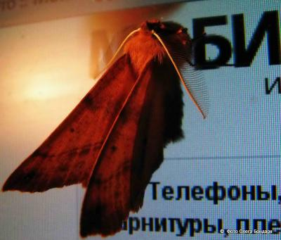 бабочка w-1.jpg