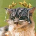 Аватар пользователя Tom_dCat
