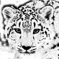 Аватар пользователя IRBIS